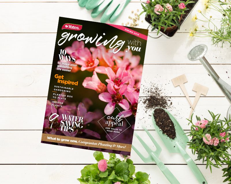growing-with-you-spring-edition