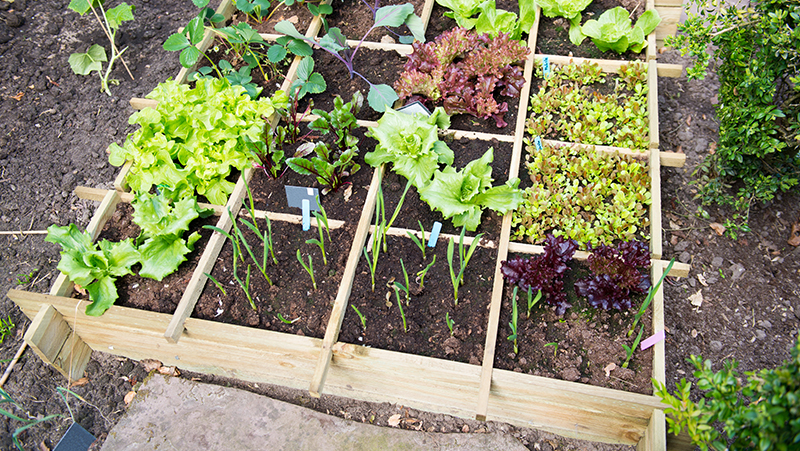 4-steps-to-creating-a-Spring-vegie-patch_1551160526250