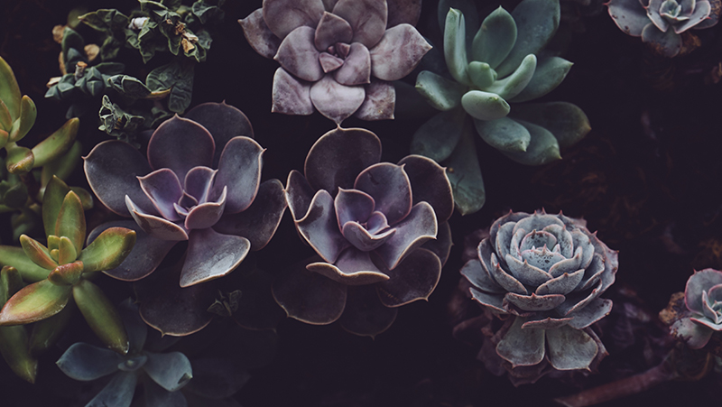 secrets-to-growing-succulents_1565567182342