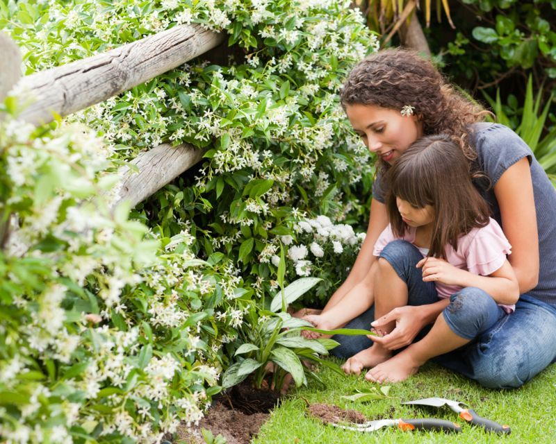 top-10-plants-to-grow-with-kids_1585264193977