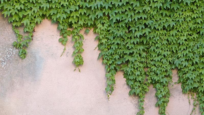 how-to-grow-boston-ivy_1551154913651