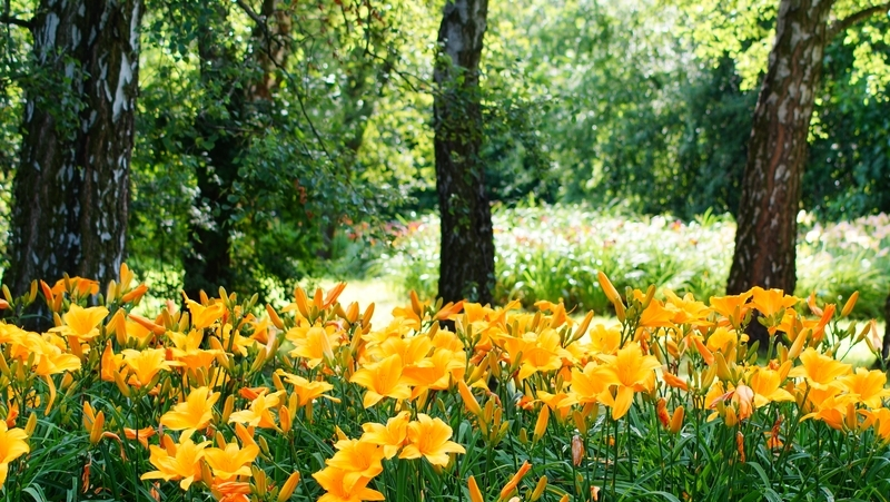 how-to-grow-daylilies_1551154920582
