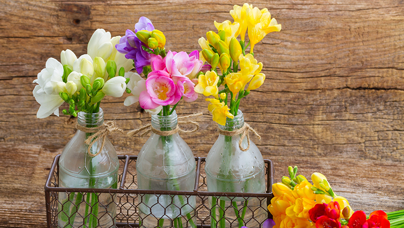 how-to-grow-freesia_1551154923571
