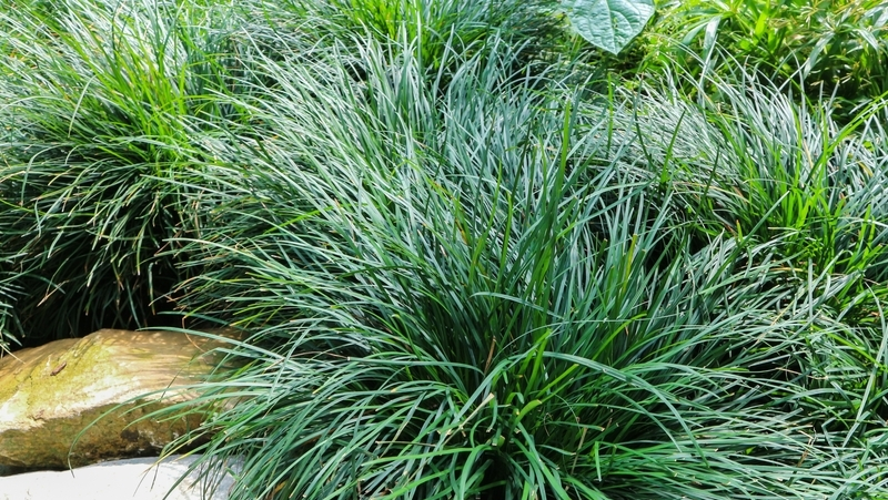 how-to-grow-mondo-grass_1551154962981