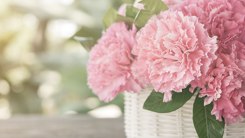 how-to-grow-peony_1551154934804