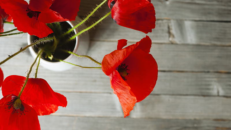how-to-grow-poppies_1551154934226