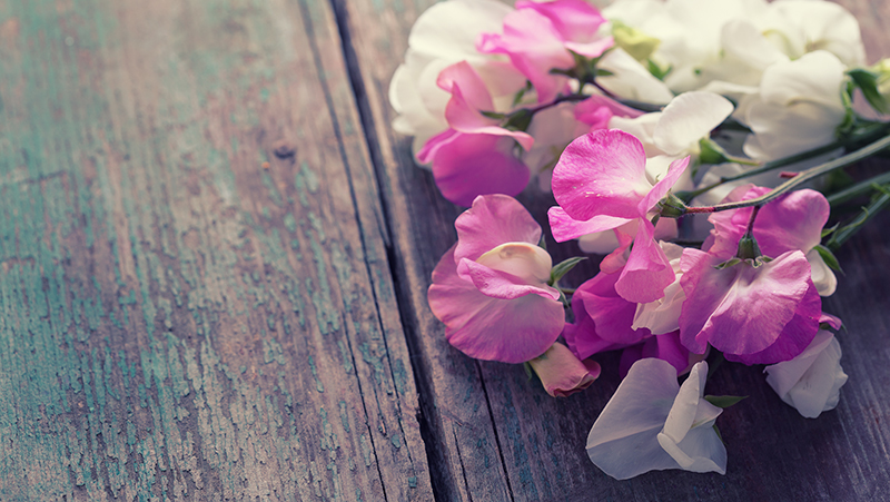 how-to-grow-sweet-peas_1551154916938