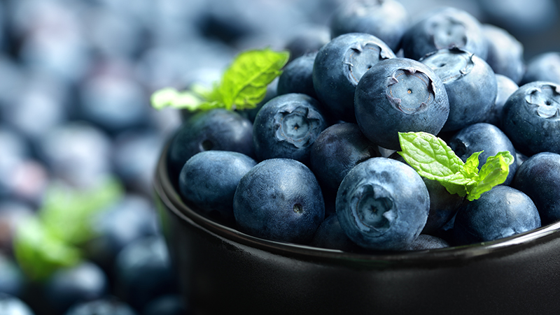 how-to-grow-blueberries_1551155001924