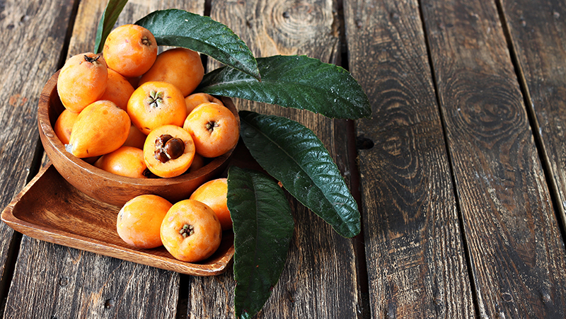 how-to-grow-loquat_1553581210497