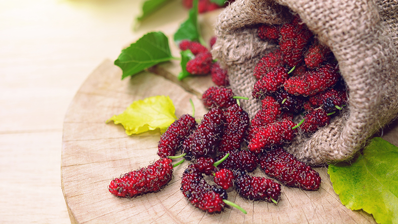 how-to-grow-mulberries_1551154999236