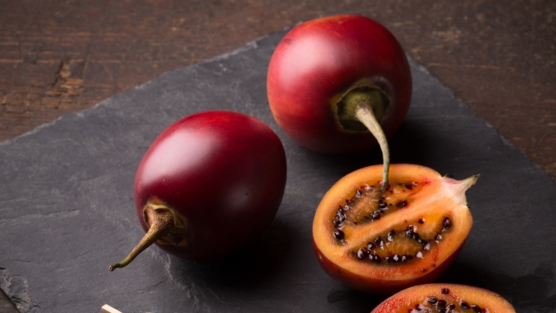how-to-grow-tamarillo_1551154997035