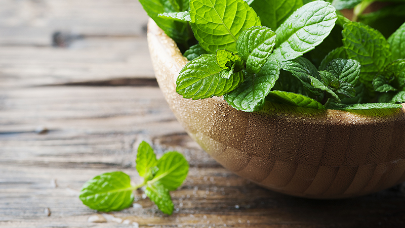how-to-grow-mint_1551160330449