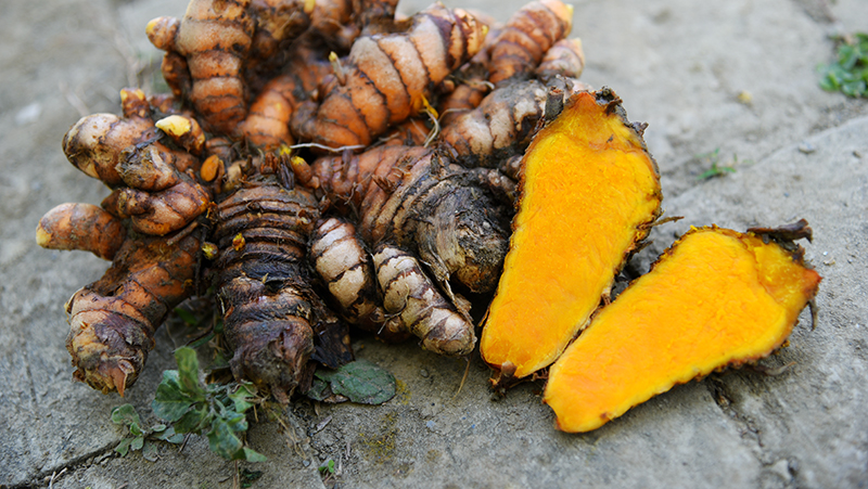 how-to-grow-turmeric_1551160327809