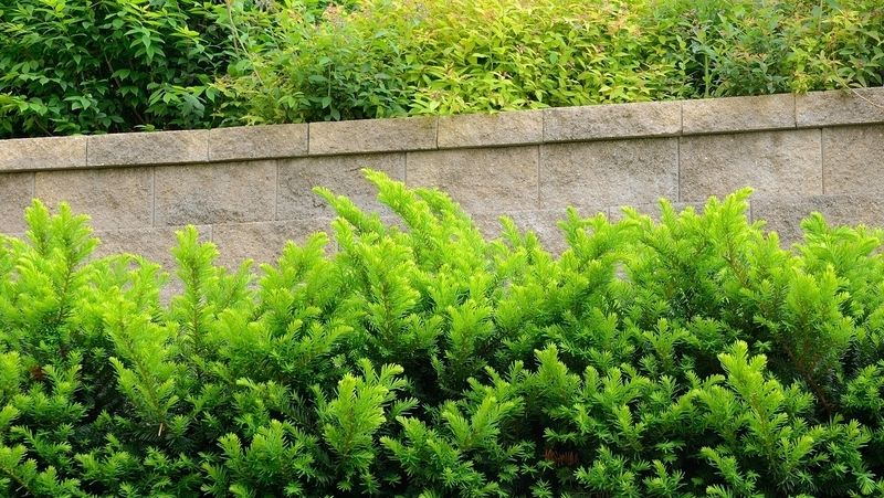 how-to-grow-taxus_1551845299705