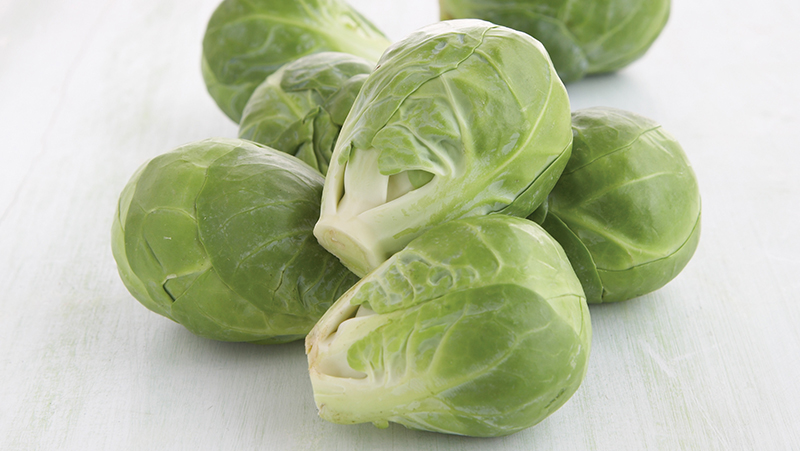 how-to-grow-brussels-sprouts_1551160547098