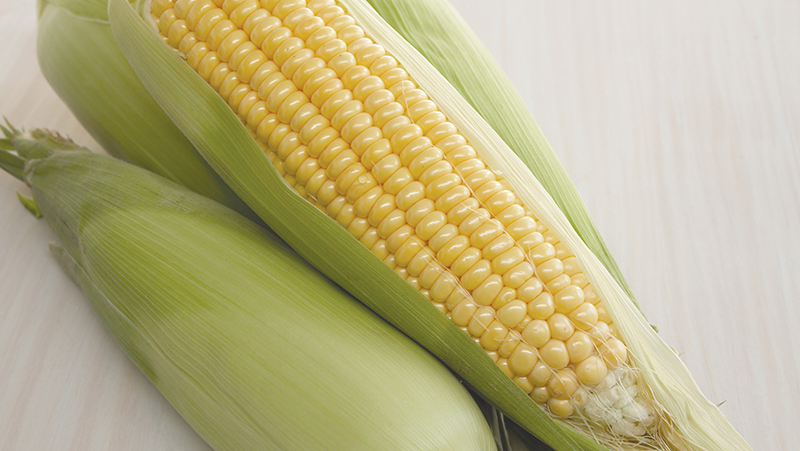 how-to-grow-corn_1551160512595