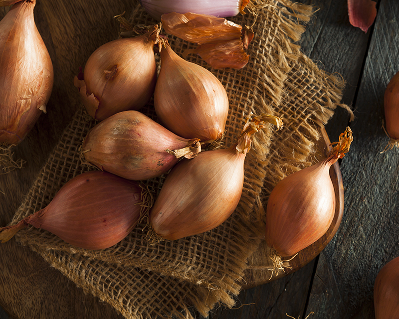 how-to-grow-onions_1551160526714