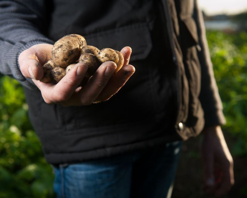 how-to-grow-potatoes_1564624551514