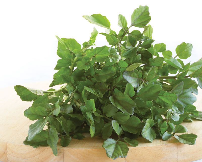 how-to-grow-watercress_1551160333883
